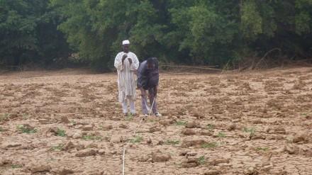 Plantation au village